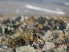 Blümchen auf dem kargen Boden des Plateaus