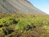 Nass, nasser, Tundra. Nur auf den Grashügelchen ist es trocken