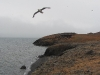 Einige Vögel trotzen am Grønsteinfjellet dem näherrückenden Winter.