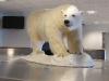 Eisbär im Flughafen von Longyearbyen