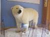 Eisbär im Krankenhaus