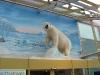 Eisbär über dem Eingang der Svalbardbutikken