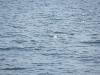 Ein Eissturmvogel schwimmt auf dem eiskalten Fjord