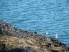 Eismöwen am Ufer